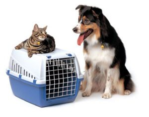 cat-dog-pet-shipping